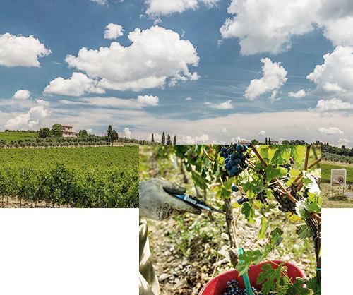 Chianti region and vineyards